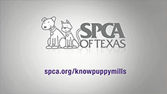 Thumbnail image for SPCA Anti-Puppy Mill Campaign